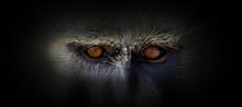 Monkey Portrait On A Black Bac...