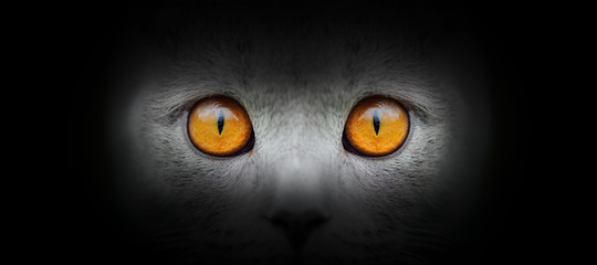 Cat portrait on a black background