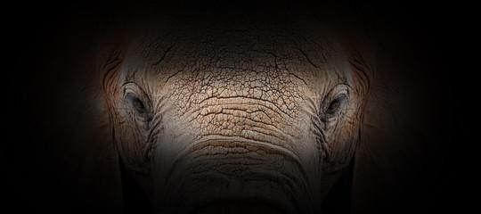Elephant portrait on a black background