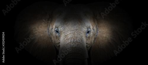 fototapeta na szkło Elephant portrait on a black background