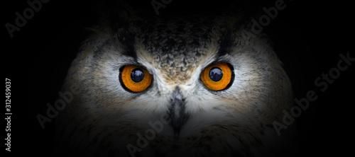 plakat Owl portrait on a black background