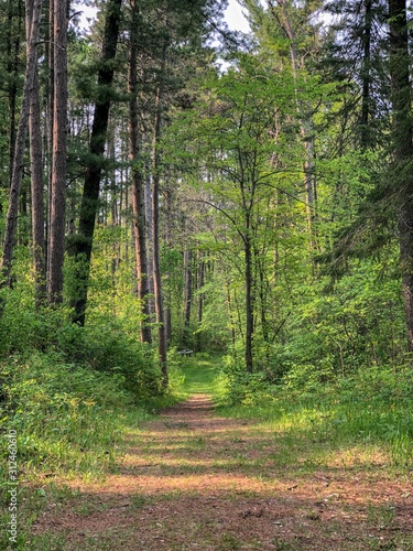 gravel path in the forest