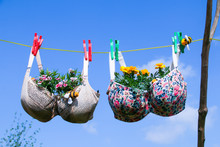 Funny Photo Of Recycled Old Bra/brassier Pegged On A Washing Line With Plants Growing In The Cups Against A Blue Sky
