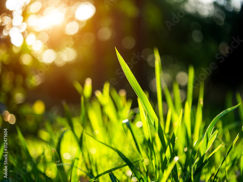 Grass regenerate in the garden. Canvas Print