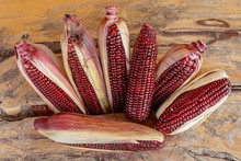Siam Ruby Queen Or Red Corn Of Bali Is A Type Of Sweet Corn. Red Corn's Kernels Are Stained With Hues Of Ruby. Fresh Sweet Corns Ears With Leaves. The Taste Is Sweet And Crisp. With Clipping Path.