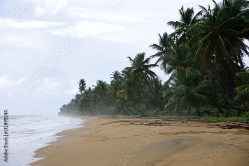 Misty sandy tropical beach and coconut trees, Playa Punta Tuna, Puerto Rico