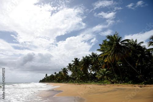 Sandy tropical beach and coconut trees, Playa Punta Tuna, Puerto Rico