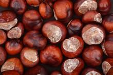 Chestnut On Wooden Background ...