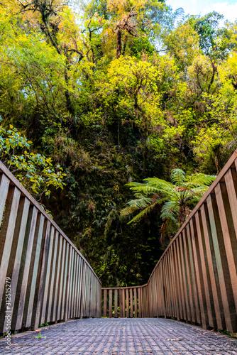 Raukuri Bushwalk, Waitomo, Waikato, New Zealand Tapéta, Fotótapéta
