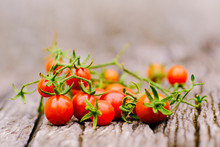 Fresh Organic Traditional Small Tomato With Green Vine