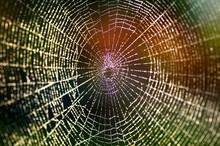 Natural Web