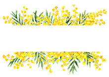 Mimosa Yellow Spring  Flower Border And Frame, Watercolor Hand Drawn Illustration Isolated On White Background