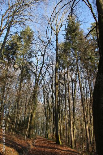 Fototapeta Forest natural landscape during winter obraz na płótnie