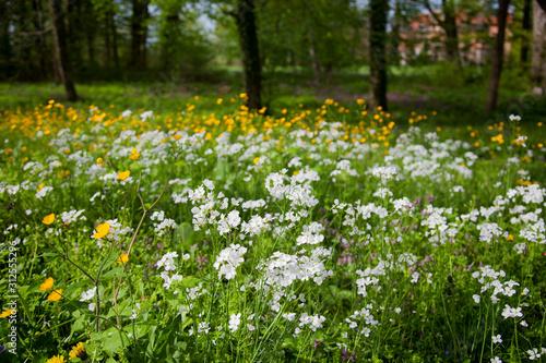 Spring meadow with cuckooflower on Crna Mlaka, Croatia