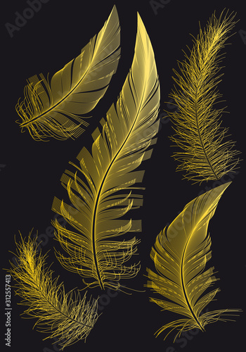 Photo  Gold feathers, vector drawings