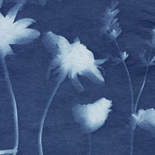 A Sun Print (Cyanotype) Created With Daisy And Lavender Flowers