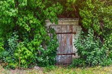 Old Wooden Door Of An Abandoned Overgrown Cellar
