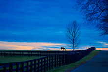 Thoroughbred Horse Grazing At Dusk.