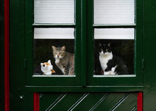 Cute Two Cats Sitting On Windowsill And Looking Out Curiously.