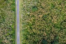 Pedal Lane On Plains Of Autumn Miscanthus