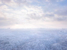 Winter Landscape With Forest M...