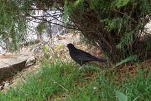 Raven Black Hidden Feathers Grass