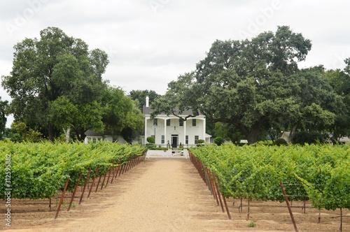 Winery in Lodi, California Canvas Print