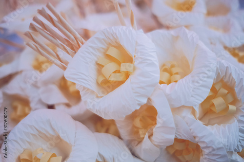 White sandalwood flower is used for funeral ceremonies Tablou Canvas