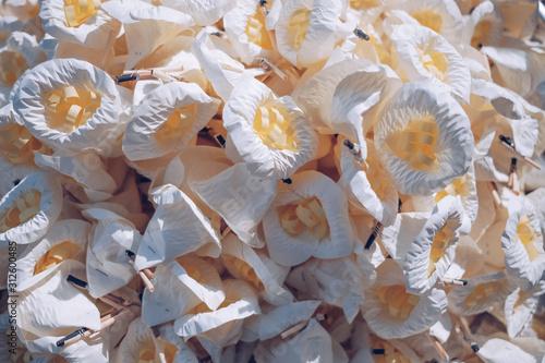 White sandalwood flower is used for funeral ceremonies Fototapet