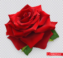 Red Rose. 3d Realistic Vector ...