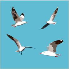 Set Of Seagull Bird Flying Iso...