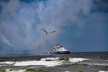 Seagull Flies Over Beach Among Airplane Smoke And Near U.S. Coast Guard Ship