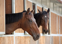Two Beautiful Horses In The Stable