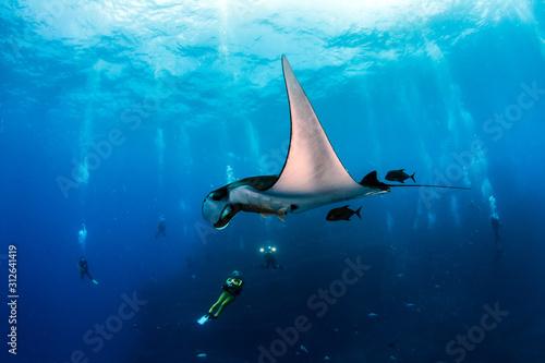 Fotografie, Obraz Manta Ray at Islas Revillagigedos, Mexico