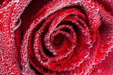Red Rose Petals Covered With Bubbles Under Water Close-up
