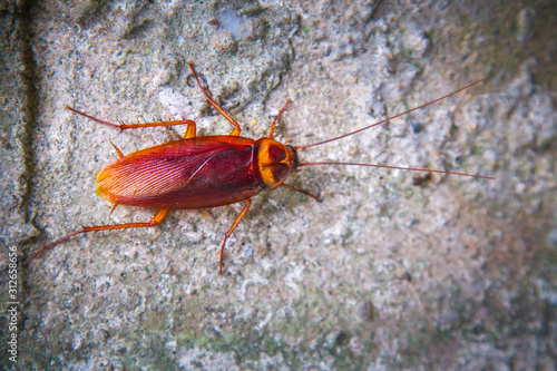 cockroach on the stone wall Wallpaper Mural