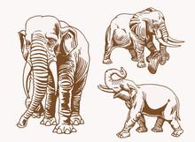 Graphical  Vintage Set Of  Elephants, Vector Sepia Illustration