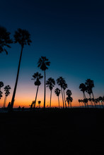 Palm Trees On The Beach At Sunset, In Venice Beach, Los Angeles, California