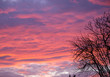canvas print picture - Black tree on the side of beautiful sunset clouds
