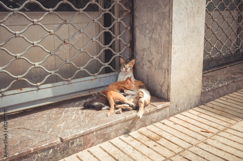 Camada de gatos Marruecos Fototapet