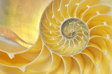 Close-up Of A Nautilus Shell R...