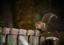 Squirrel Energized