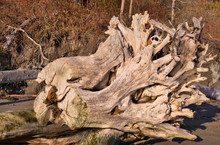 2019-12-29 A LARGE STUMP ON TH...