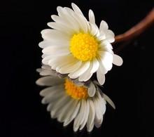 Macro Flowers With Petals Clos...
