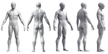 Human Body Anatomy Of A Man In...
