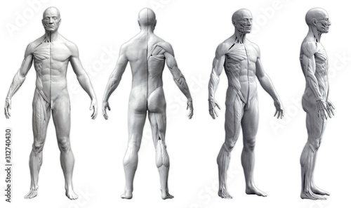 Human body anatomy of a man in four views isolated in white background - 3d rend Canvas Print