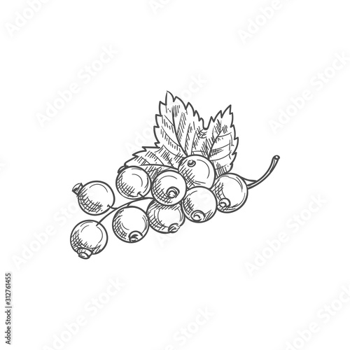 Photo Black currant fruit isolated berries and leaves