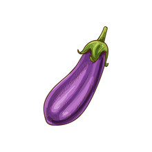 Aubergine Vegetable, Eggplant ...