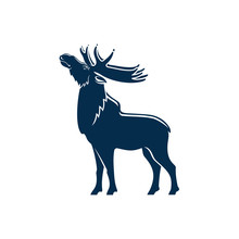 Big Moose With Antlers Isolate...