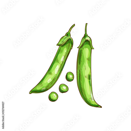 Carta da parati Peas seeds in green pods isolated legumes sketch